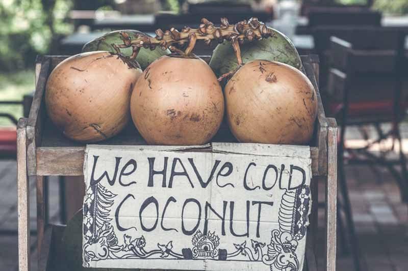cold-coconuts