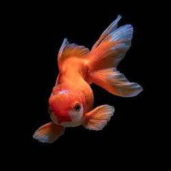 a pretty fish swimming